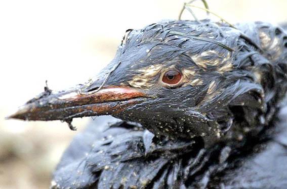 Глобальная катастрофа, нефть