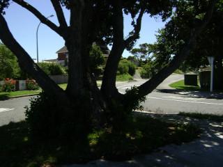 Suburban Paraparaumu Beach through a tree
