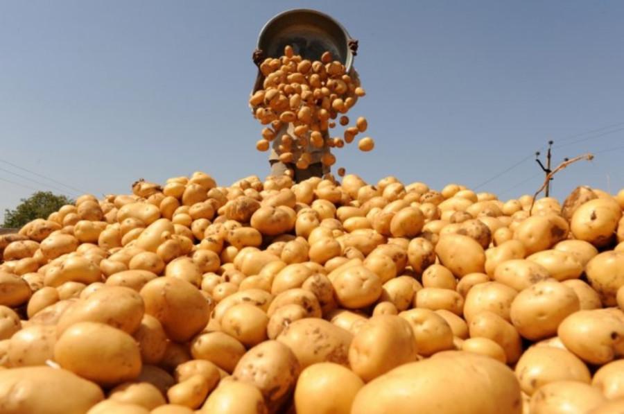 Новые подробности о вреде и пользе ГМО