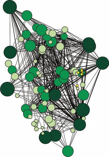 Диаграмма сети грибов, которая связывает группу деревьев и показывает наличие высокосвязанных «материнских деревьев». BEILER ET AL 2010