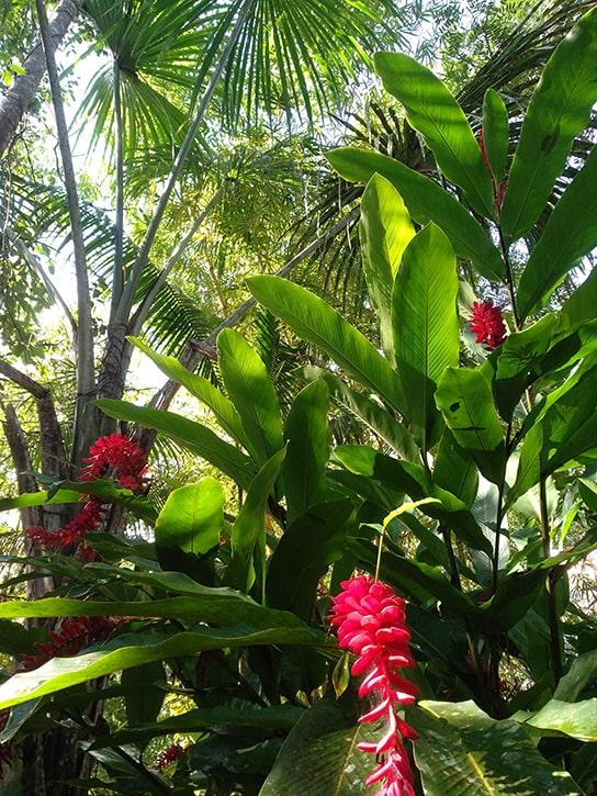 Амазонские джунгли - наполненный силой дом аяуаски