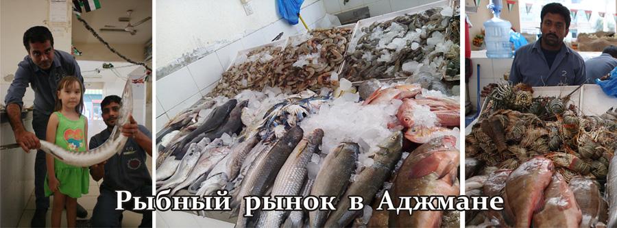 00_uae_fishmarket