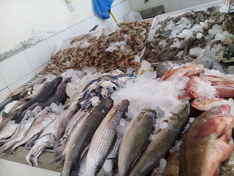 03_uae_fishmarket