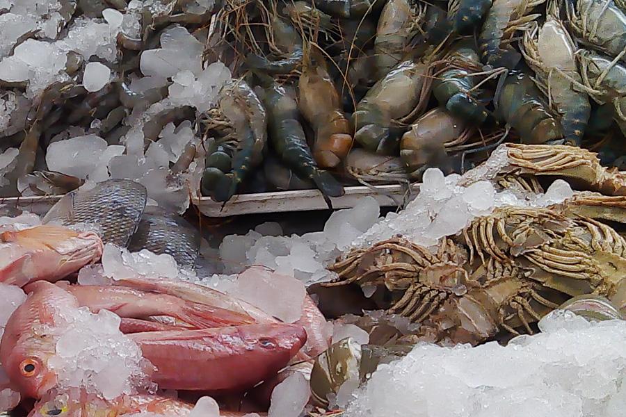 05_uae_fishmarket