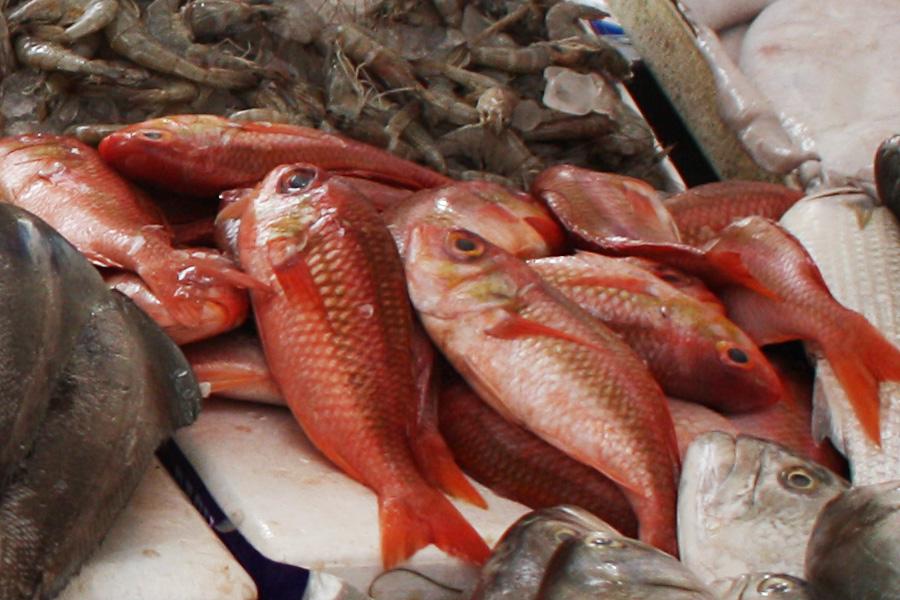 10_uae_fishmarket