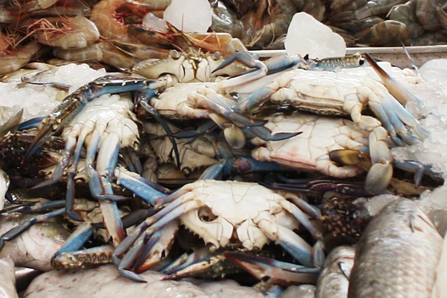 09_uae_fishmarket