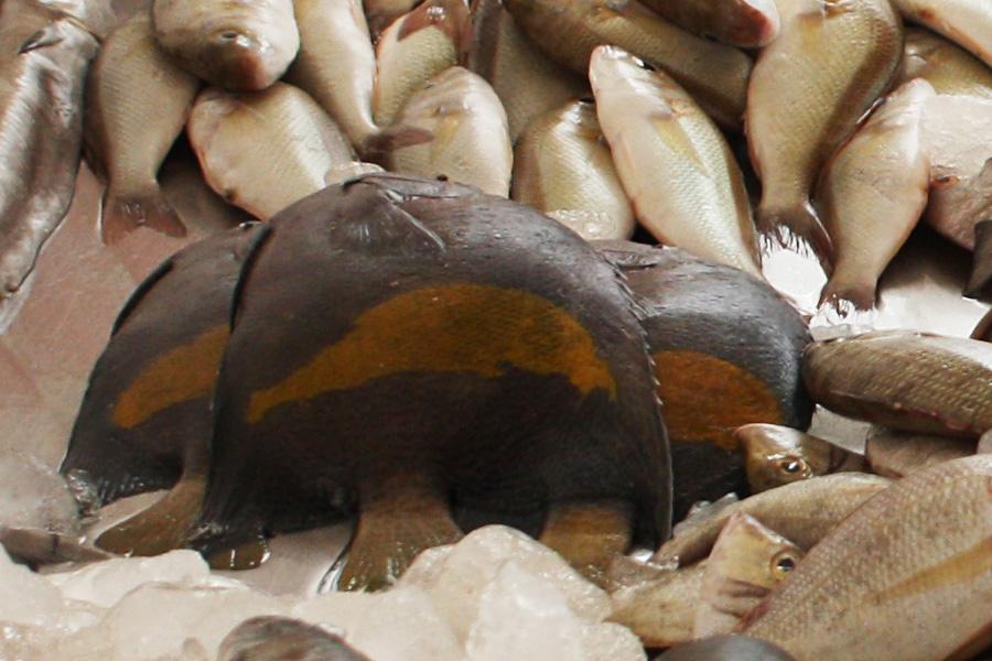 12_uae_fishmarket