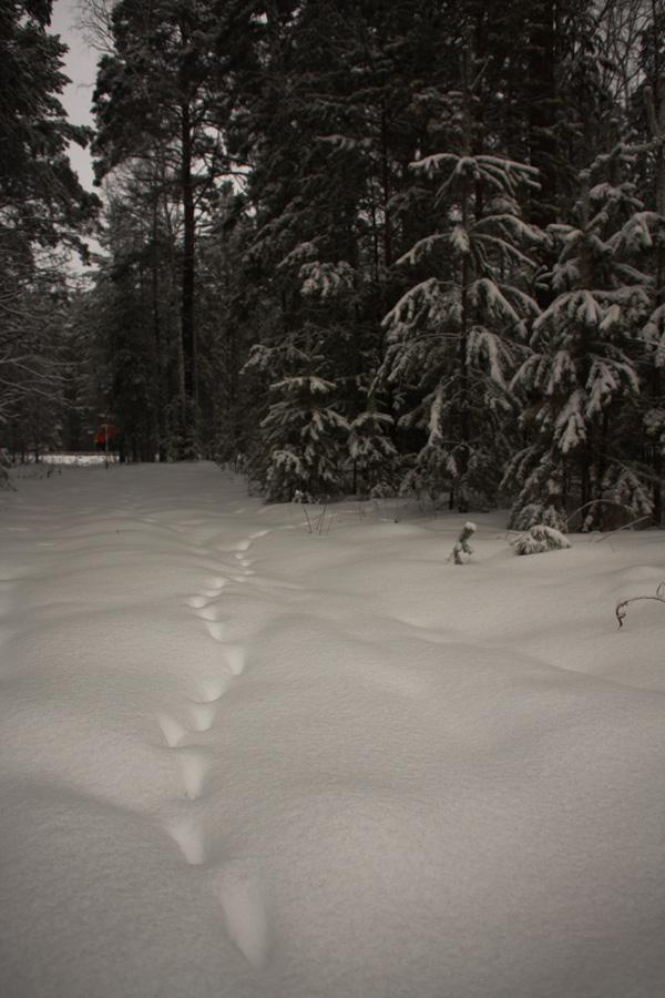 02_snow