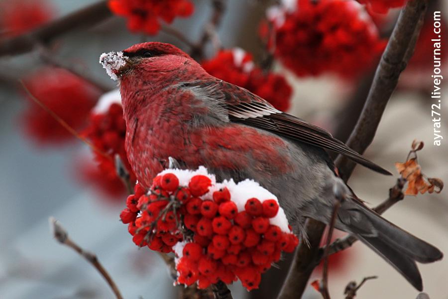 01_ishim_bird