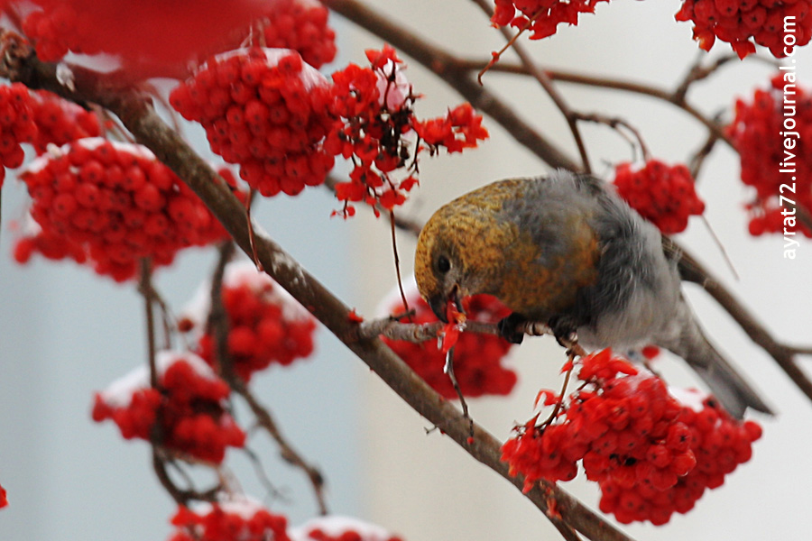 05_ishim_bird