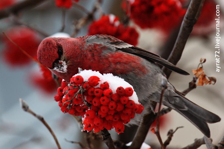 02_ishim_bird