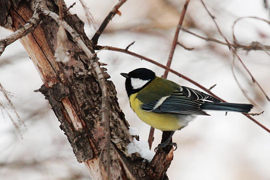 01_birds_tyumen