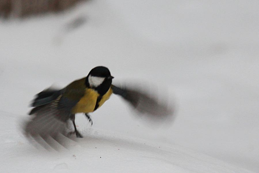 06_birds_tyumen
