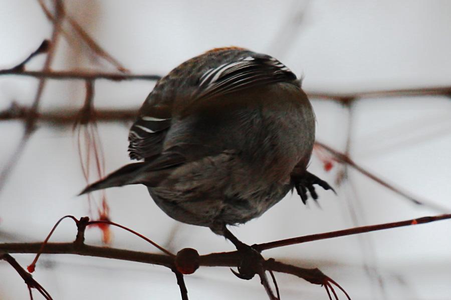 04_birds_tyumen
