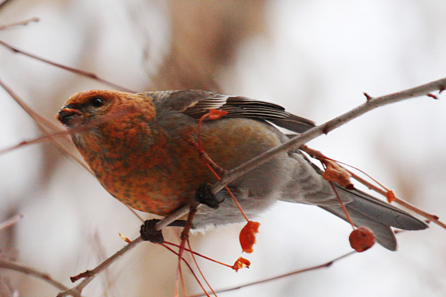 03_birds_tyumen