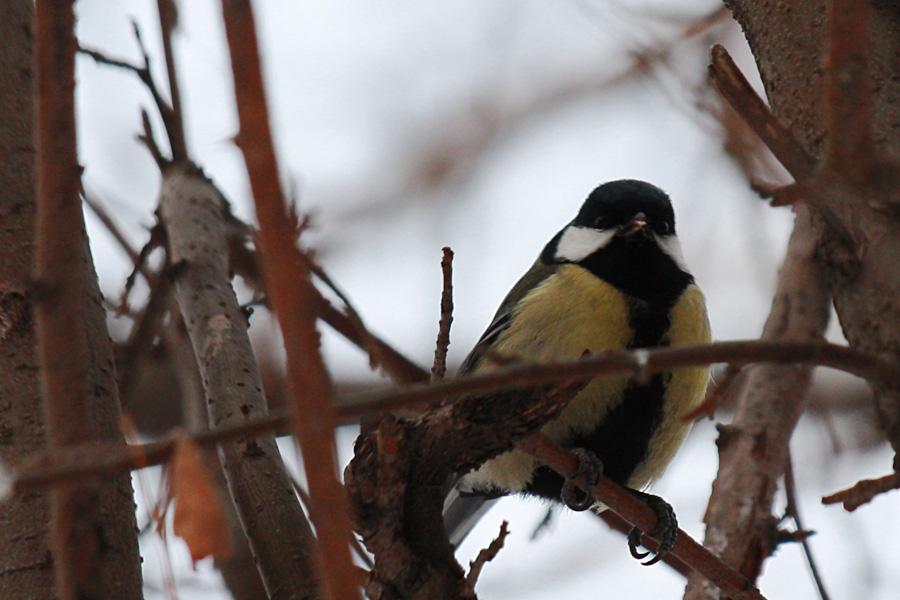02_birds_tyumen