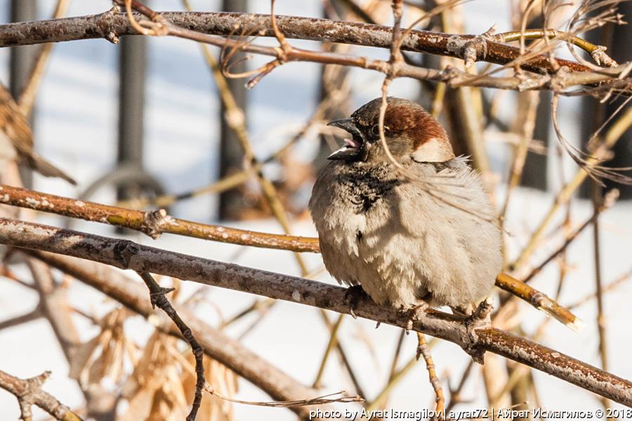 11_spring_sparrow.jpg