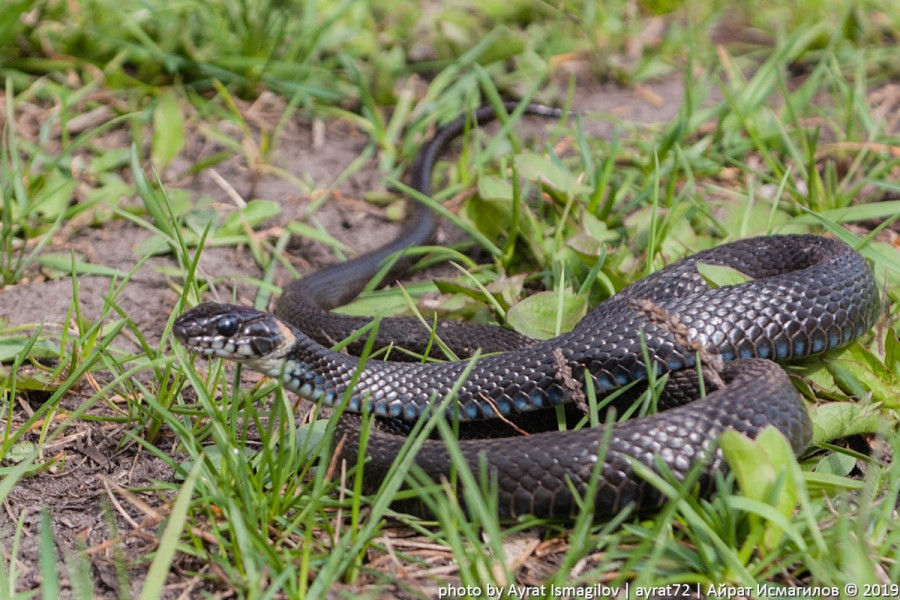 01_spring_snake.jpg