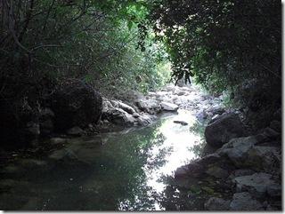 Просвет в джунглях
