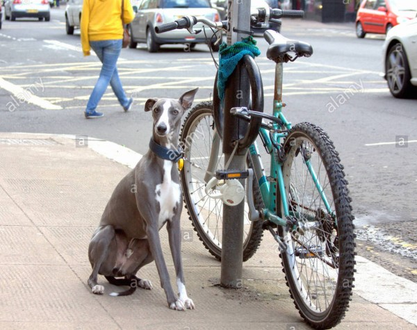 drole-dhumour-chien-et-location-velo-ha-ha-photo-jge3c5