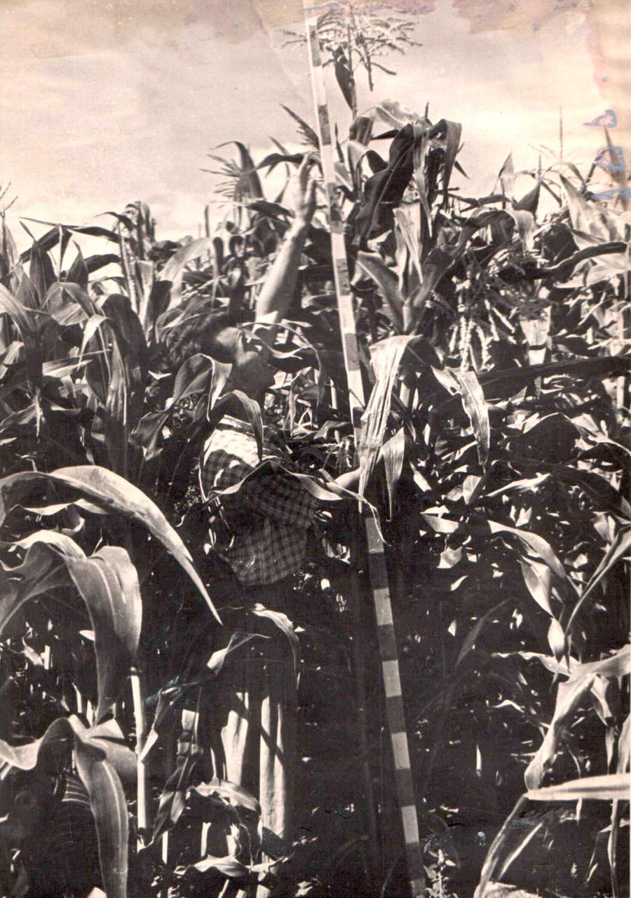 Агроном Буда Дамдинов из к-за 19 партчъезда. 1960 г..jpg