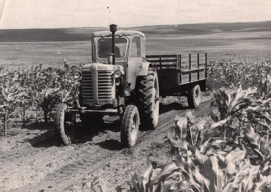 Климов на кукурузном поле. Судунтуй. 1961 г..jpg