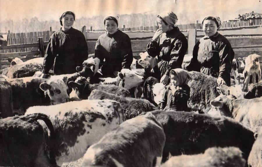 12. Ферма в Аргалее.jpg