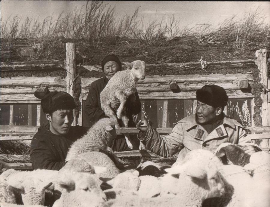 10. Приплод. Сахюуртын Жигмитов Жамбалдоржо. 1962 г..jpg
