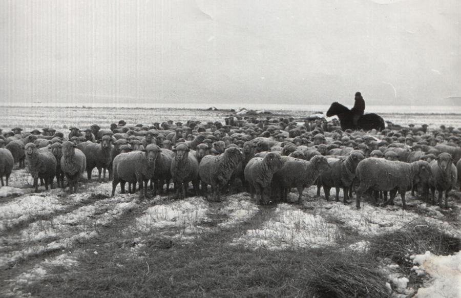 22. Хонин дээрэ ажал хэнэ.jpg