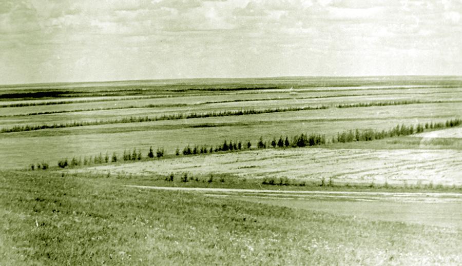 Зелёный пояс вокруг села Красная Ималка.jpg