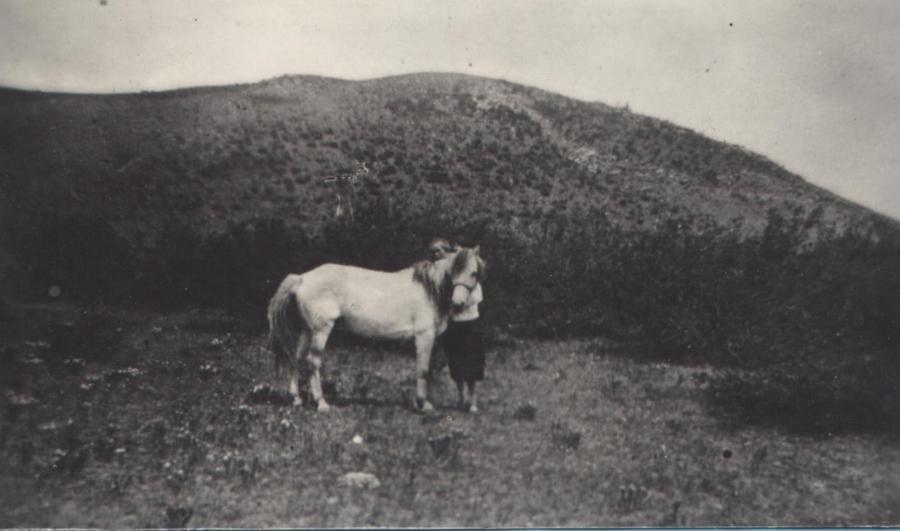 2. Тургэн hаарал единственный конь, обслуживающий санэпидемическую службай аймака.jpg