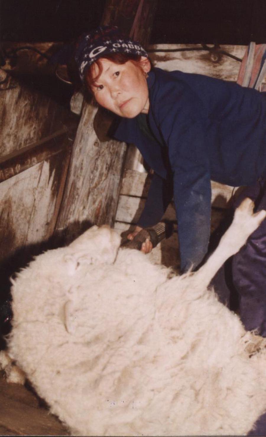 Жапова. Ц-Хангил. Стрижка овец.jpg