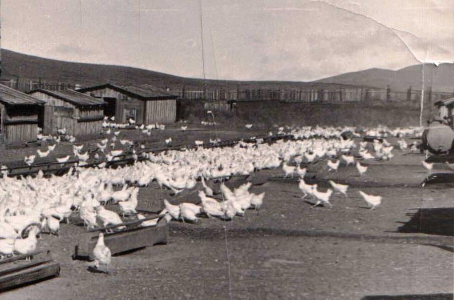 Дульдургинская птицеферма.jpg