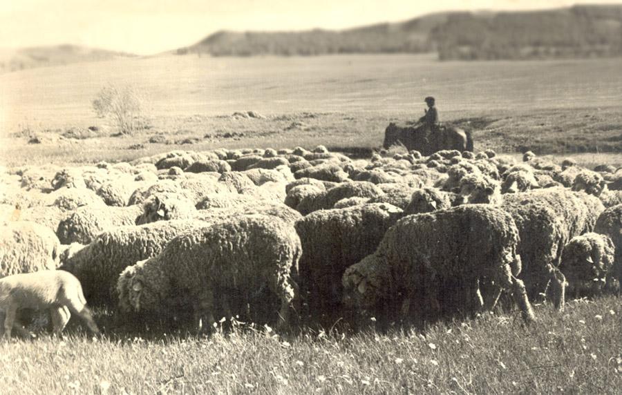 Овцы02.jpg