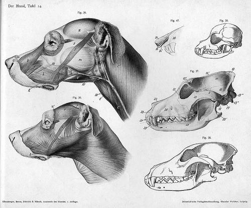 Справочник по анатомии животных для художников