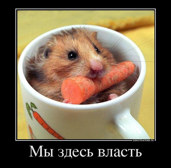 132103_myi-zdes-vlast_demotivators_ru