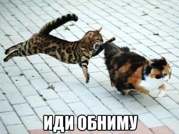 Иди обниму