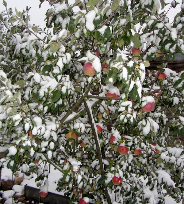 первый снег 16 октября 14 г