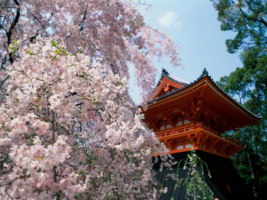 paisajes-de-japon-cerezos.jpg