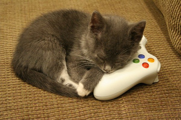 VIDEO-GAME-THEIF-cats-34334063-600-399