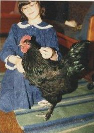 A large Black Langshan rooster indoors, standing on a rug in front of bitty!Azz, who is wearing a blue dress with white lace trim on the collar, and large pink plastic glasses.
