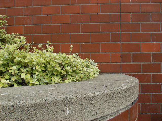 little squishy green plants in Harvey Milk Plaza