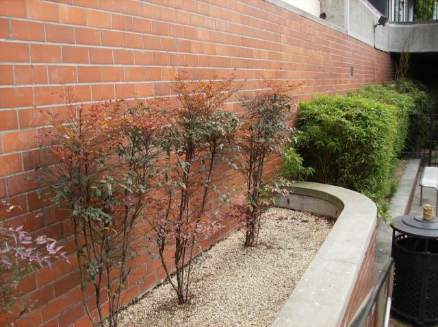trees in bricks in Harvey Milk Plaza