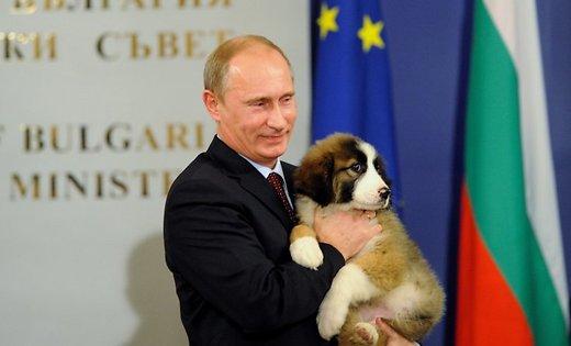 японцы подарили Путину щенка