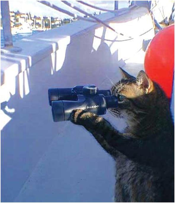 кошки-шпионы