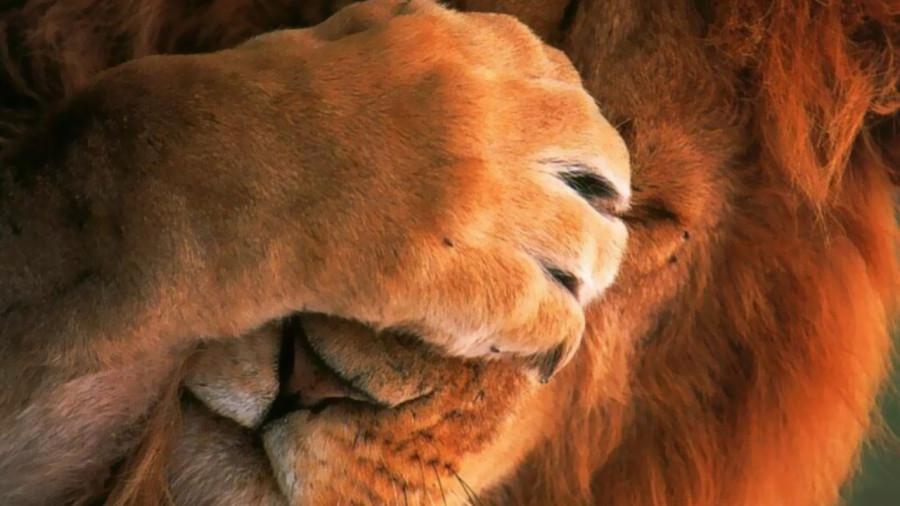 Датчане объяснили зачем они расчленяют животных на глазах у детей