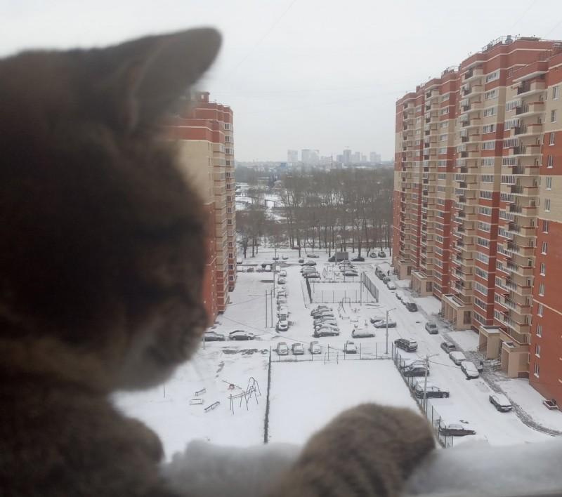Радуемся с кошкой снегу