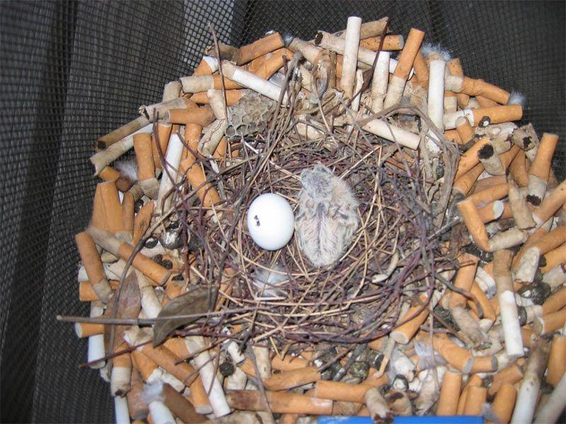 Гнездо на балконе прикольные картинки, видео и фото животных.