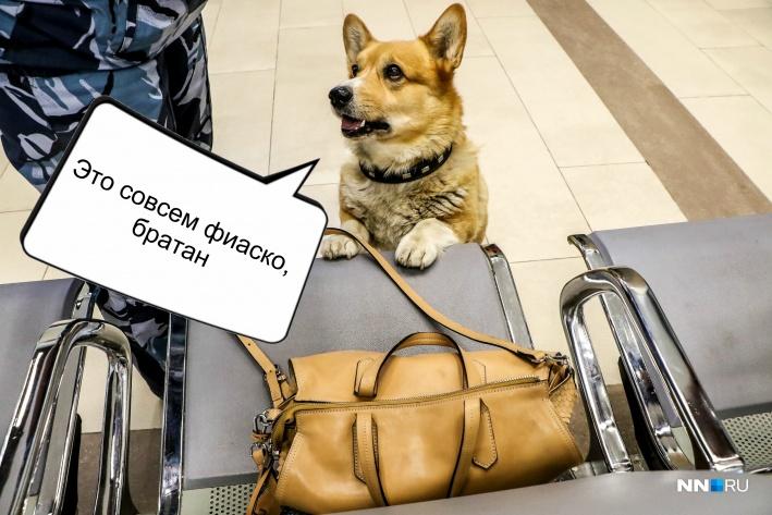 Рыжий активно патрулирует Московский вокзал Фото: Наталья Бурухина