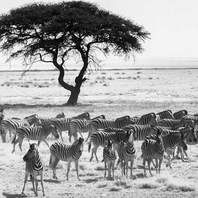 обитатели и природа в африке фото карандашом тюрьме это своего